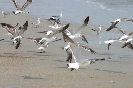 seagullz