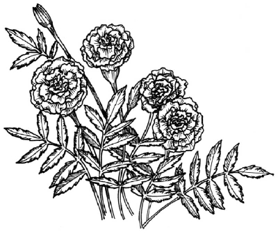 how-to-draw-flowers-and-plants-84