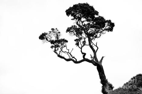 tree-in-black-and-white-yurix-sardinelly